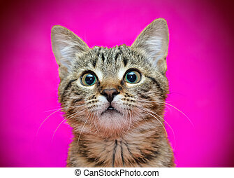 Muzzle of tabby cat on pink background