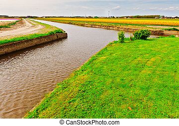 Irrigation Canal between the Fields of Tulips, Netherlands