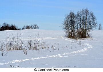 Winter foot path, rural field with tries