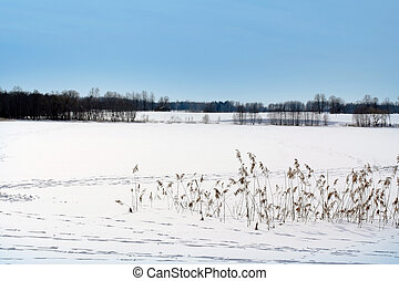 Frozen winter lake covered by snow
