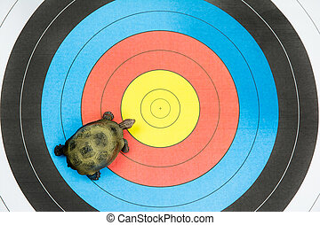 turtle view from above on target background