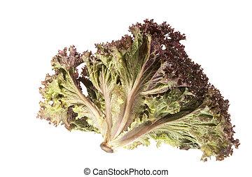Lollo Rosso - Isolated fresh lollo rosso (batavia lettuce)...