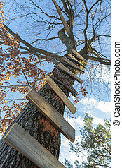 Tree ladder - Wooden boards nailed onto a high tree forming...