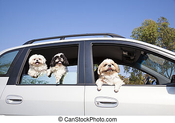 dogs family enjoying in the car