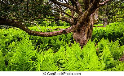 helechos, circundante, árbol, Longwood, Jardines,...