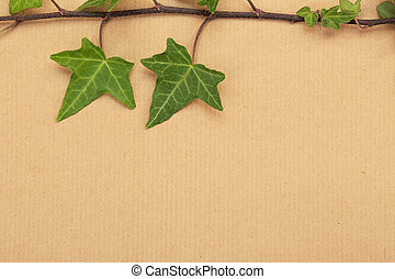Decorative ivy on a wrapping paper - Decorative ivy on a...