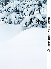 snow-covered fir trees and snow drifts - winter background -...