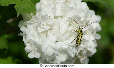 bug rapidly climbs - black and yellow beetle climbs rapidly...