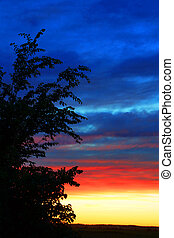 Vertical sunset and tree silhouette - Beautiful and colorful...