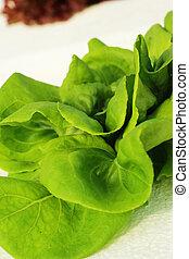 蔬菜, 農場, 綠色, 沙拉, 營養液培養