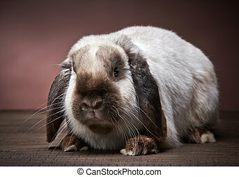 rabbit - portrait of rabbit on a brown background