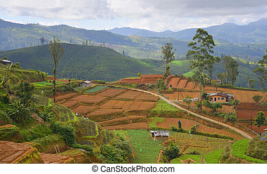 A small village in the mountains of Sri Lanka - cultivation...