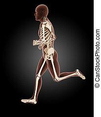 jogging male medical skeleton