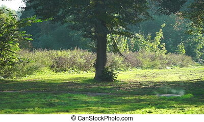 City park in sunny day - Green trees in summer forest at...