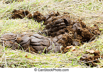 Cow dung on a meadow in the mountain.