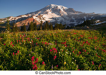 Cascade Range Rainier National Park Mountain Paradise Meadow...