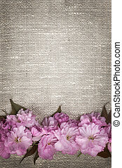 Cherry blossoms on linen background - Border of pink cherry...