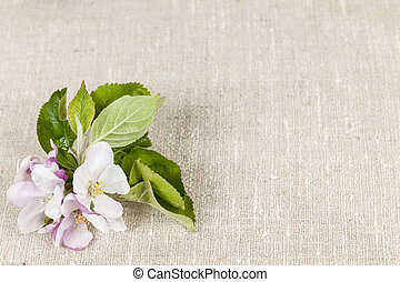Linen background with apple blossom - Woven linen background...