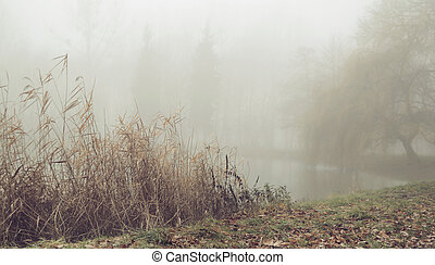 Foggy morning over the still lake - Foggy morning over the...