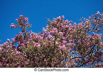 Sakura on the background of blue sky