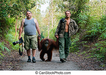 Photographers walk with orangutan - Photographers Andrey...