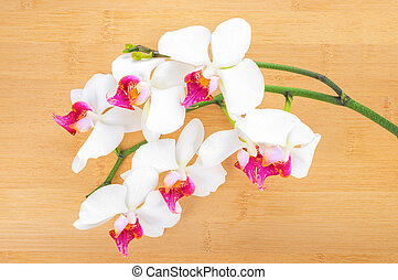 branch white with red  orchid on bamboo wooden  background