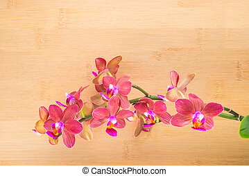 spa concept, red orchid on the bamboo background