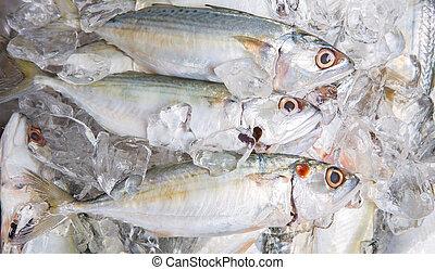 Short-bodied Mackerel Fish - Fresh short-bodied mackerels...