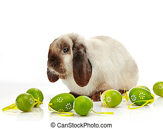 rabbit and Easter eggs on a white background