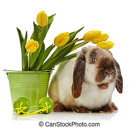 Easter rabbit on a white background