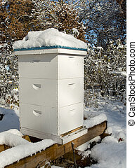 Beehive in the Winter