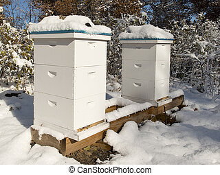 Beehives in the winter - A pair of beehives in the winter in...