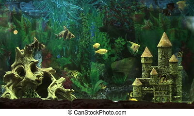 Small aquarium fish - Colorful aquarium fish Clean...