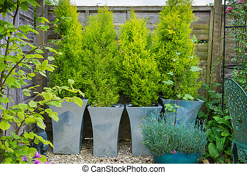 Garden with evergreen trees in containers