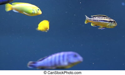 Aquarium fish - Colorful aquarium fish Clean environment...