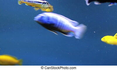 Aquarium - Colorful aquarium fish Clean environment with...
