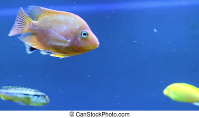 Aquarium - Colorful aquarium fish. Clean environment with...