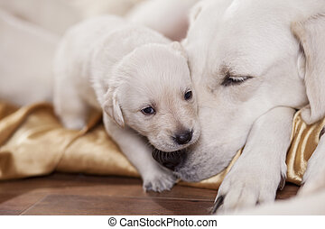 mom and child - close up portrait of a white labrador...