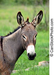 Wild zambian donkey - Nature, animals
