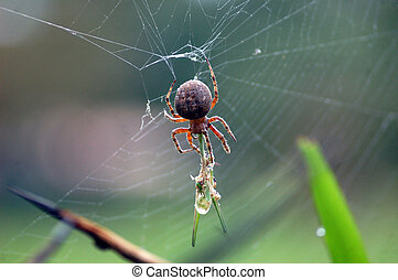 Spider catching insect - Nature, arachnids