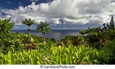 Garden Of Eden Timelapse Maui Hawai - Shot in the Garden of...