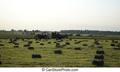 compressed hay bales - people loading of the tractor trailer...
