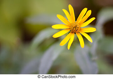 Yellow flower - yellow flower on a flower background with...