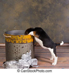 Dog looking in garbage can - Seven weeks old adorable little...