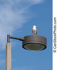 View from Above - Ring Billed gull standing on top of a lamp...