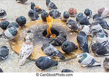 Pigeons Keeping Warm - Pigeons trying to keep warm by an...