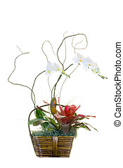 White Orchid Basket Arrangement - White orchids arranged...