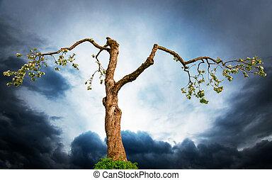 old apple tree on dramatic sky