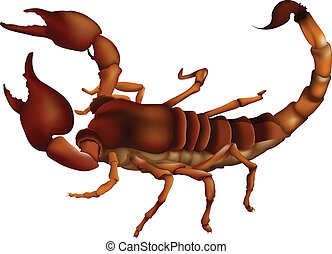 A scorpion - Illustration of the scorpion