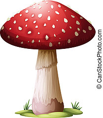 Royal Agarics - Illustration of a Royal Agarics on a white...